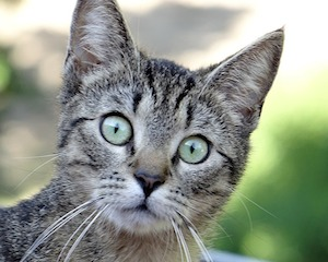 cat-359915_640