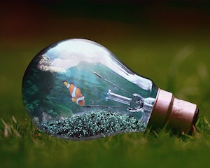 light-bulb-1129247_640