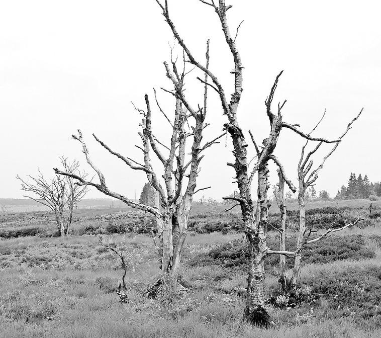 trees-1455213_1280