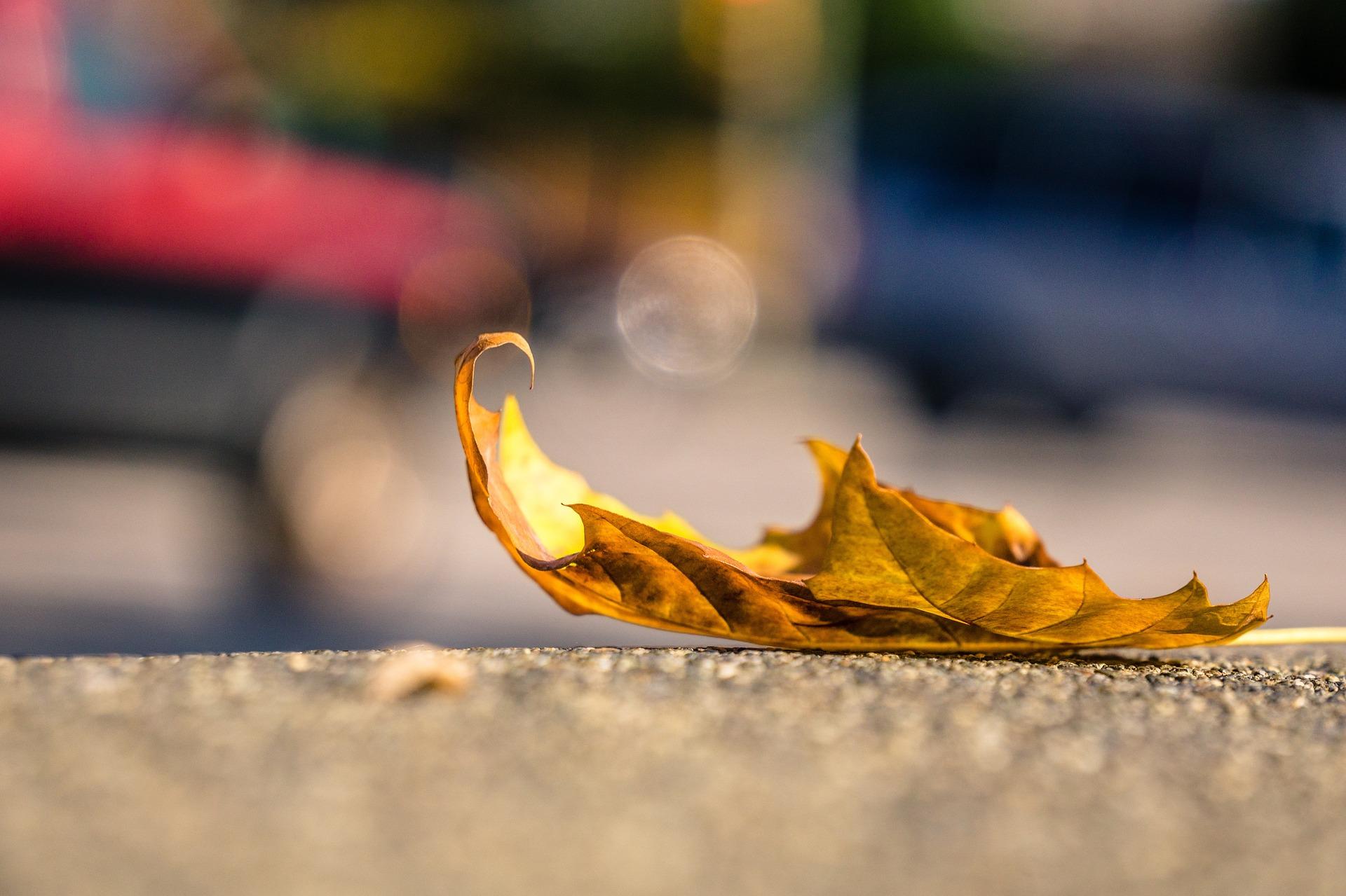 leaf-1082118_1920